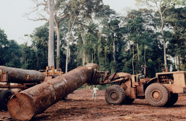 Threats to Rainforests