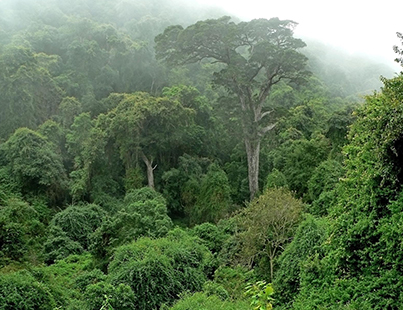 NY TIMES ARTICLE: A Battle to Protect Forests Unfolds in Central Africa