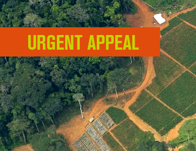 Urgent Palm Oil Appeal