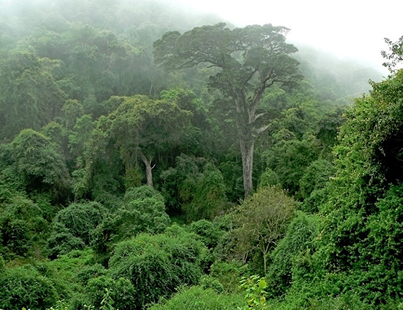 Report charts way to better inclusion of forest communities in Congo Basin land use planning processes
