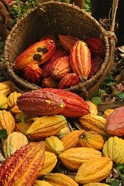 Newsletter - Asháninka cocoa growers report record production levels for 2013