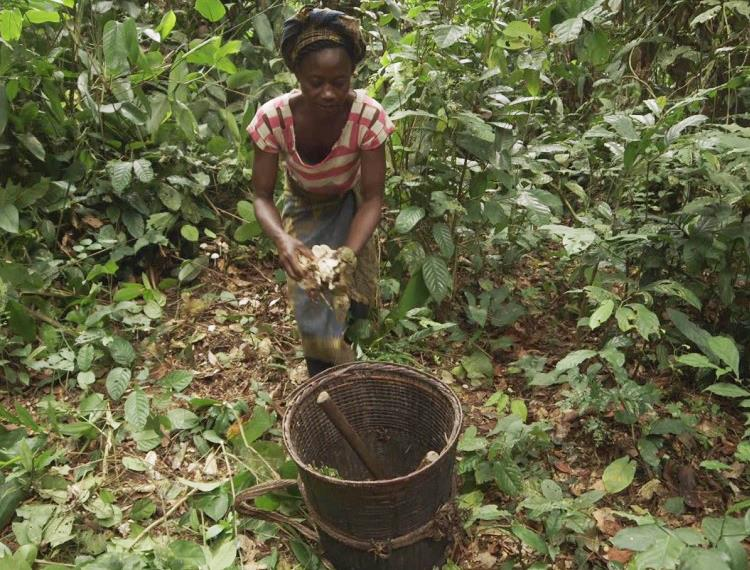Video: Unleashing the potential of community forests in DR Congo