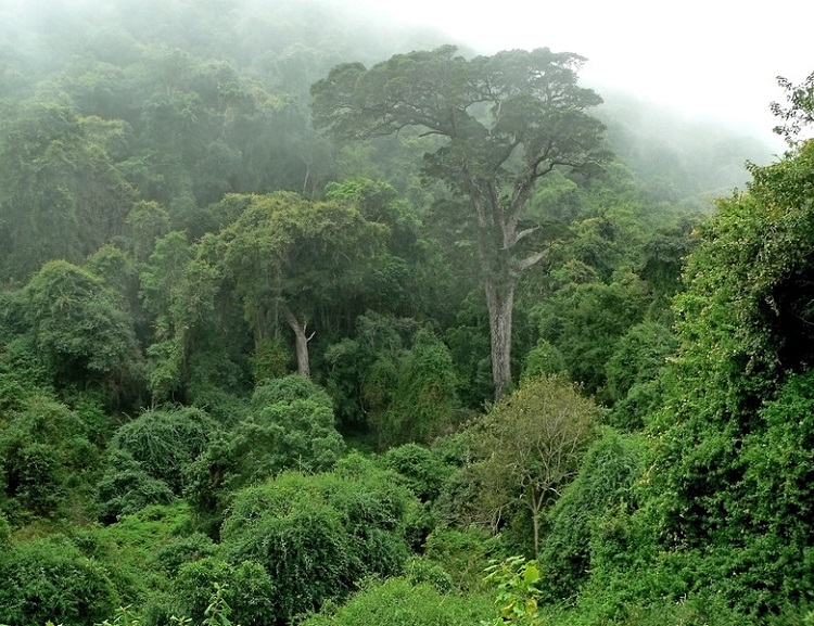 Cameroon communities speak out about impacts of large rubber plantation