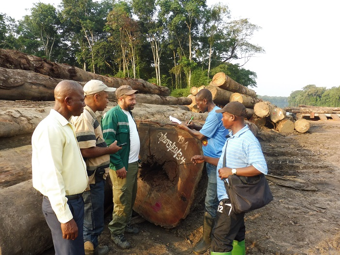 Real-time forest monitoring: First joint verification takes place in DRC