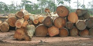 PRESS RELEASE: Congo threatens to open world's second largest rainforest to new industrial loggers