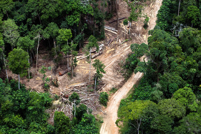 New RFUK Research Shows Link Between 'Sustainable Forest Management' and Deforestation in DRC