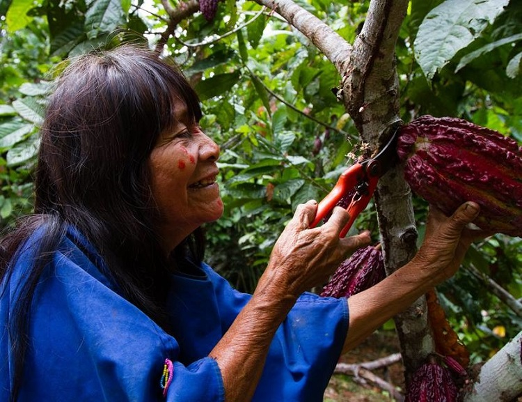 From war to sustainable chocolate: Indigenous Amazonian cocoa producers awarded prestigious United Nations 'Equator Prize'