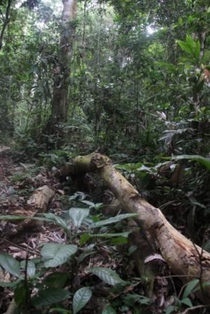 Enough Rainforest Martyrs - Rainforest Foundation Statement