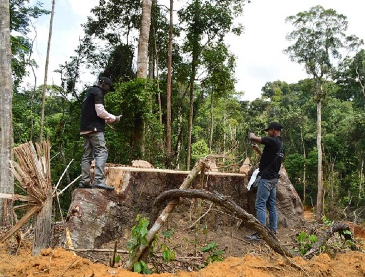 Community based monitoring in Cameroon helps bring illegal loggers to justice