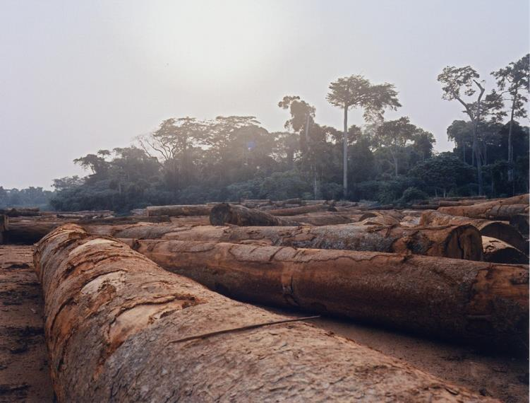 Donors called on to address breakdown in forest governance in DR Congo as Chinese company accused of widespread illegal logging