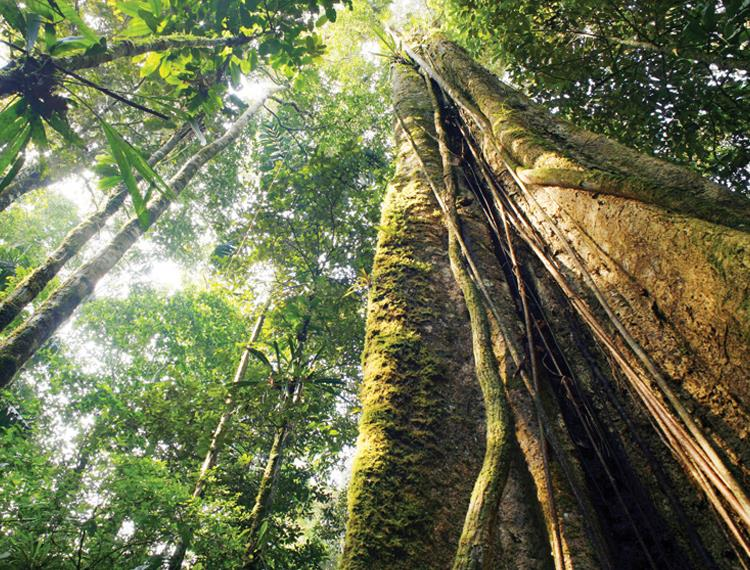 The Green Climate Fund in the Congo Basin Rainforests - Good Money After Bad?