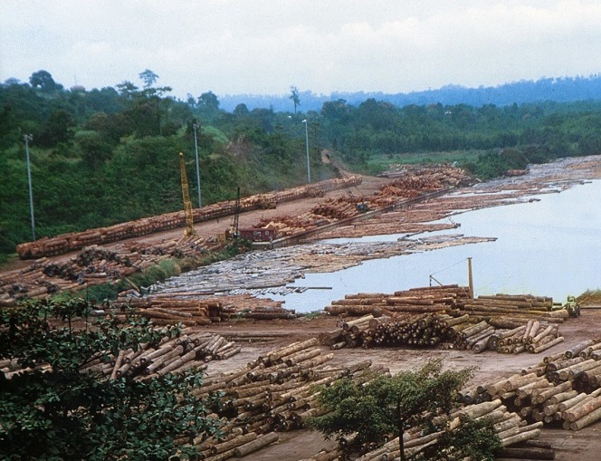 Environmental charities call on DRC government to halt plans to open up the world's second largest rainforest to loggers