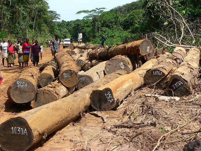 Government of Norway gives green light to continuing massive illegalities in Congo's rainforests